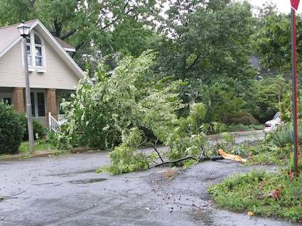 Trees Down from Hurricane Irene