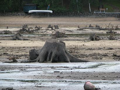 Stumps Return to the Surface Again
