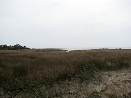 Tidal Estuary North Carolina