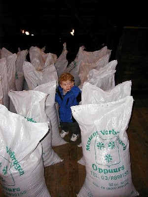 Climbing among the grain bags
